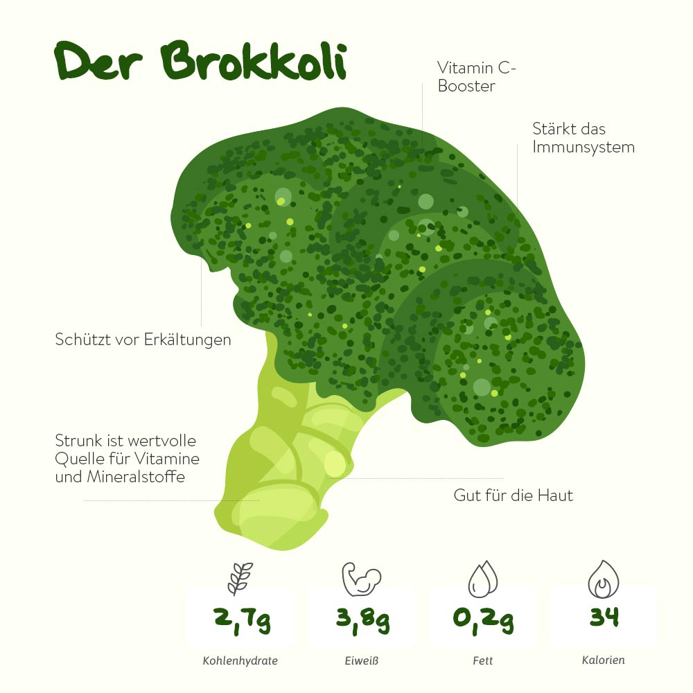 Der Brokkoli – der Energielieferant